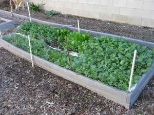garden43