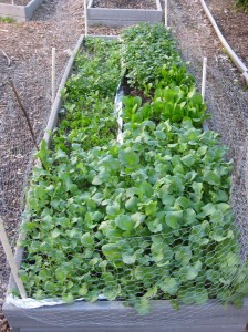 research-garden