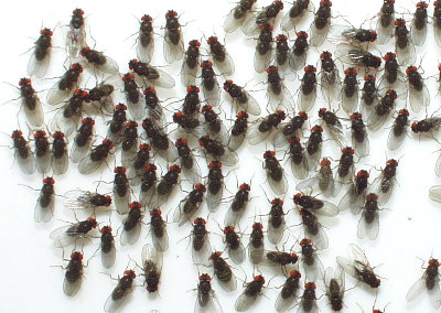 rotline question of the week how do i get rid of all these flies in my worm bin the solana. Black Bedroom Furniture Sets. Home Design Ideas